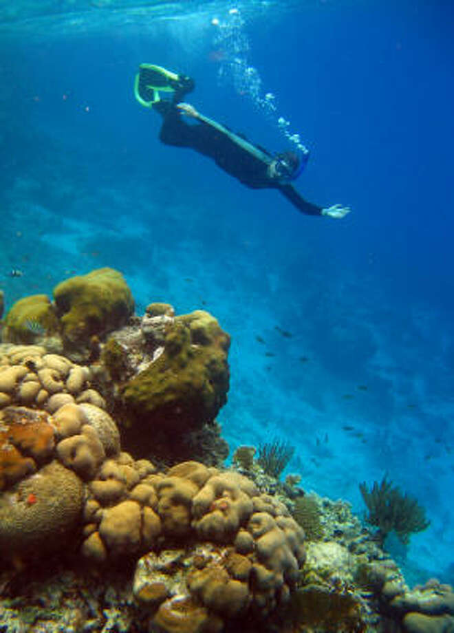 Bountiful coral reefs near the shore attract snorkelers and divers to the Dutch island of Bonaire. Photo: Phillip Photography