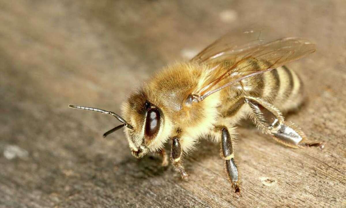 Tomorrow from 3:30 to 5:30 p.m., Audubon Greenwich will present Native Pollinators: A walk & talk with Kim Stoner.