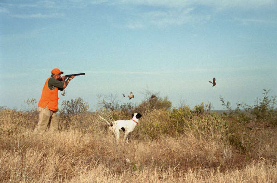 After enjoying a decent quail season in 2007, most Texas wingshooters almost certainly will see fewer birds this season. Photo: Joe Doggett