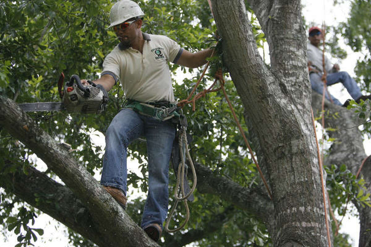 Tino Flores of Tino's Tree Service works in Houston's Memorial neighborhood. Flores is one of several local Salvadoran entrepreneurs who are forming a quasi chamber of commerce.