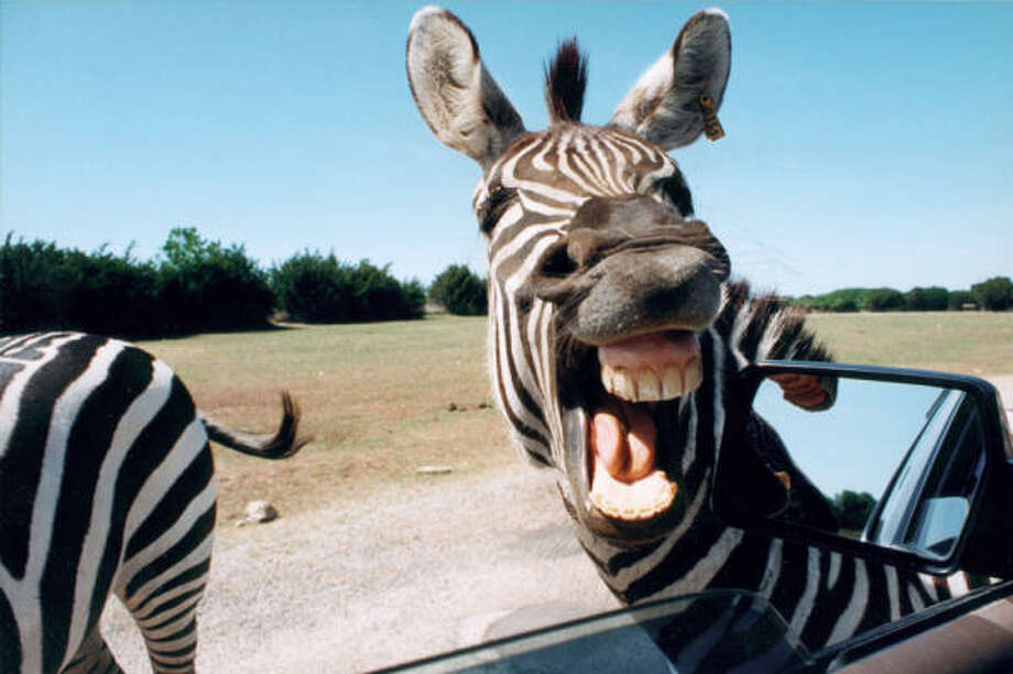 Show me pictures of animals that live in africa