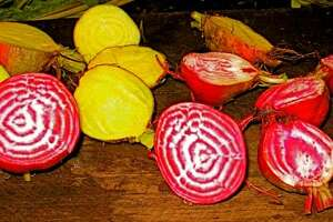 CAN'T BEAT BEETS: Chioggia (red and white) and Golden beets (yellow) make tasty winter additions to the garden.