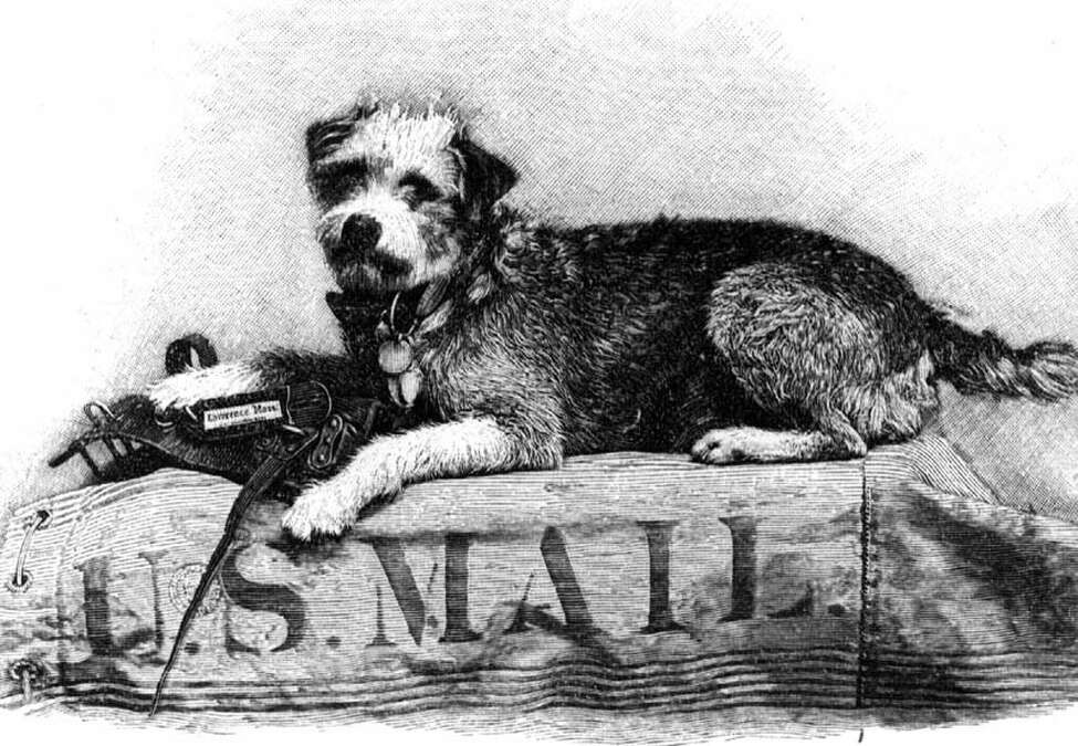 Owney, a stray mutt that wandered into an Albany post office in 1888 and became the unofficial mascot of the Railway Mail Service. (Times Union archive)