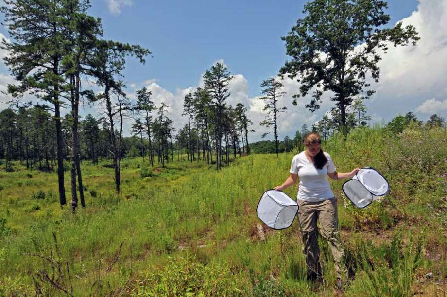 Albany Pine Bush Preserve assistant ecologist Amanda Dillon walks to a location to release Karner blue butterflies into the preserve on Tuesday July 26, 2011 in Albany, NY.  Preserve officials claim that a captive breeding program for the endangered Karner blue butterfly, coupled with a controlled burning program to reestablish the PIne Bush habitat, has caused a dramatic rebound in the numbers of the butterfly. (Philip Kamrass / Times Union) Photo: Philip Kamrass / 00014040A