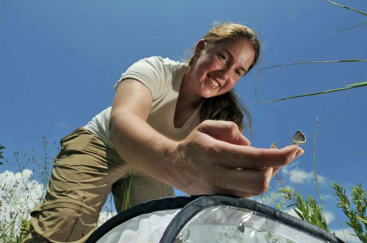 Albany Pine Bush Preserve assistant ecologist Amanda Dillon releases a Karner blue butterfly into the preserve on Tuesday July 26, 2011 in Albany, NY. Preserve officials claim that a captive breeding program for the endangered Karner blue butterfly, coupled with a controlled burning program to reestablish the PIne Bush habitat, has caused a dramatic rebound in the numbers of the butterfly. (Philip Kamrass / Times Union)