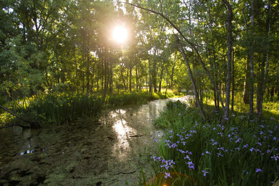 Armand Bayou Nature Center's healthy bayou, surrounded with native trees and flowers. Photo: Nick De La Torre, Chronicle