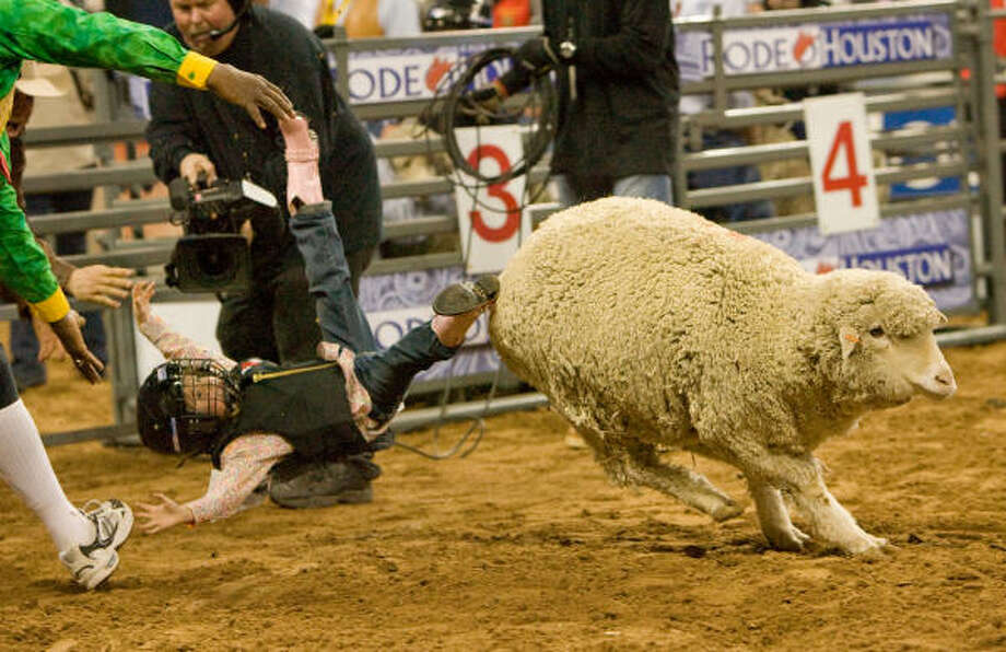 Taylor Schugart hardly makes it out of the chute before being upended at the Mutton bustin' competition on Wednesday. Photo: Steve Campbell, Chronicle