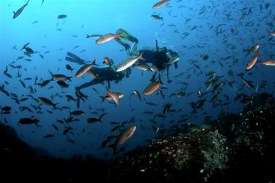 Incroyable The Flower Garden Banks National Marine Sanctuary Is Texasu0027 Most Scenic  Place To Dive,