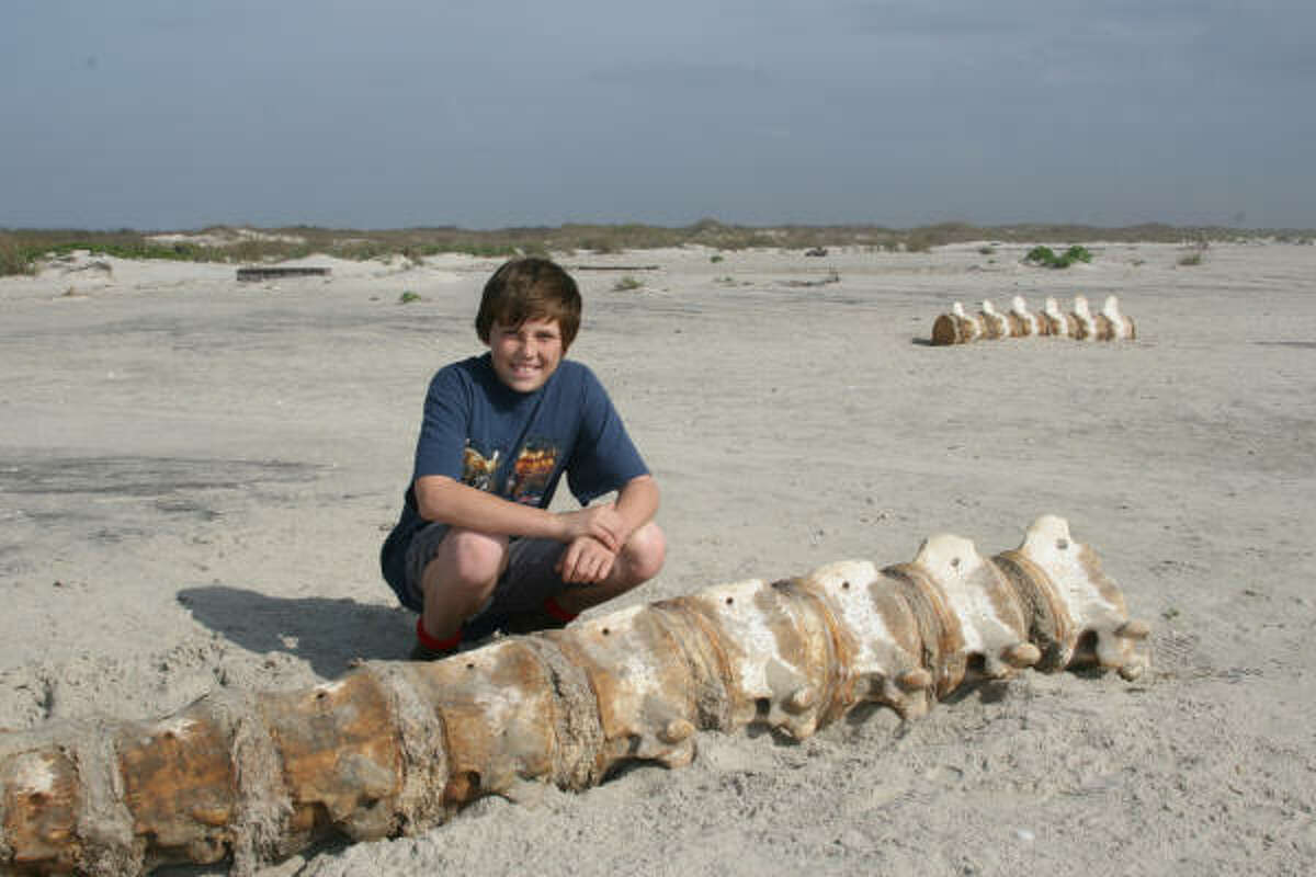 Wyatt Lang, 13, of Pasadena inspects sections of the backbone of a large whale that washed ashore on Matagorda Island in December.