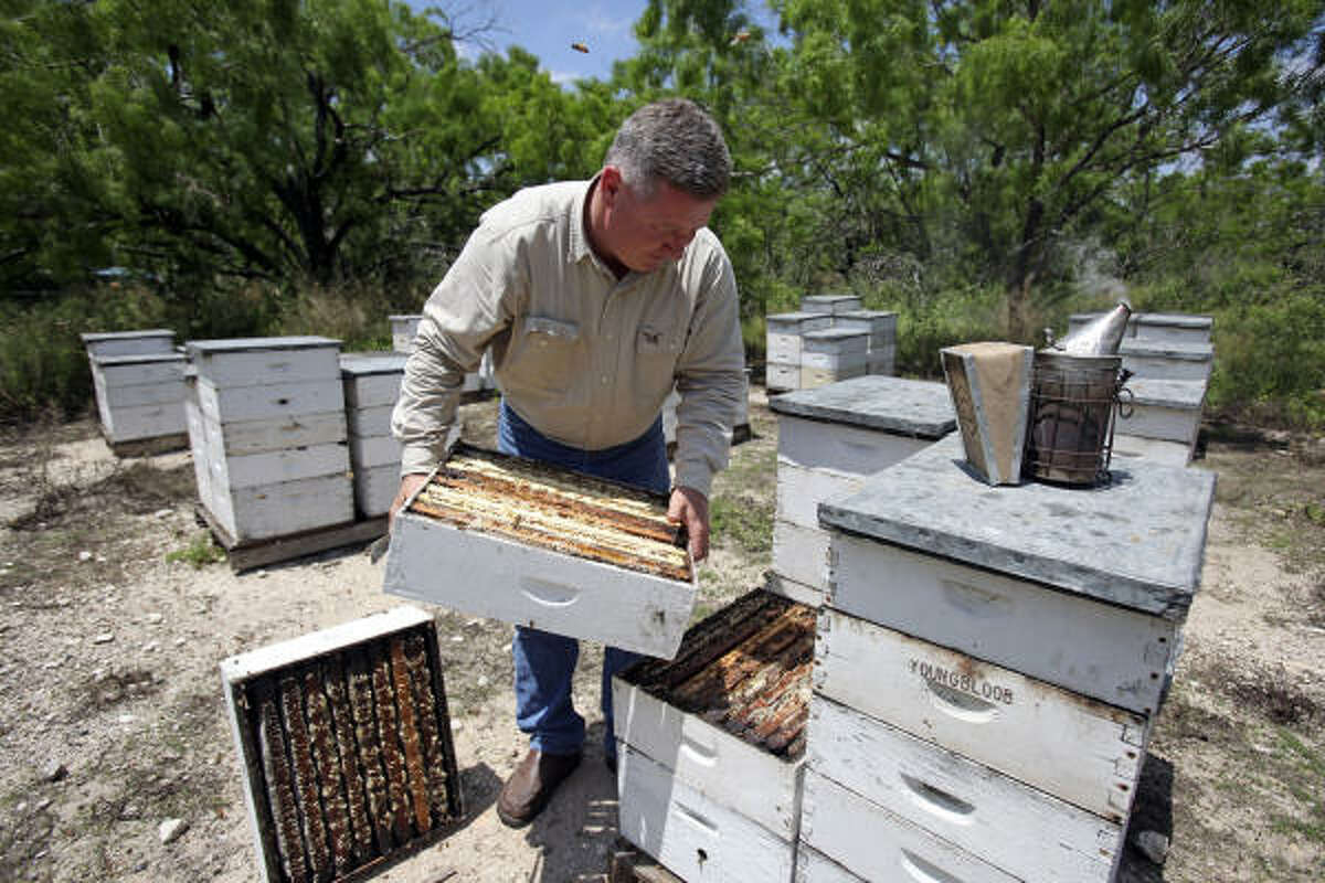 Todd Youngblood tends to hives this week near Pearsall in South Texas. His bee population has stabilized recently amid the general decline.