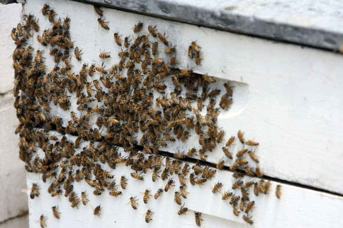 Some officials worry that if the bee decline can't be altered, the industry may not be economically viable.