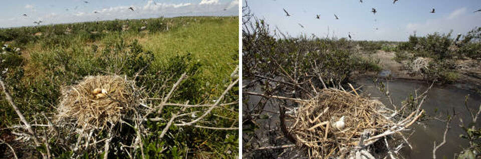 In this two picture combo, oil smeared pelican eggs are seen in a nest on Cat Island on May 22, 2010
