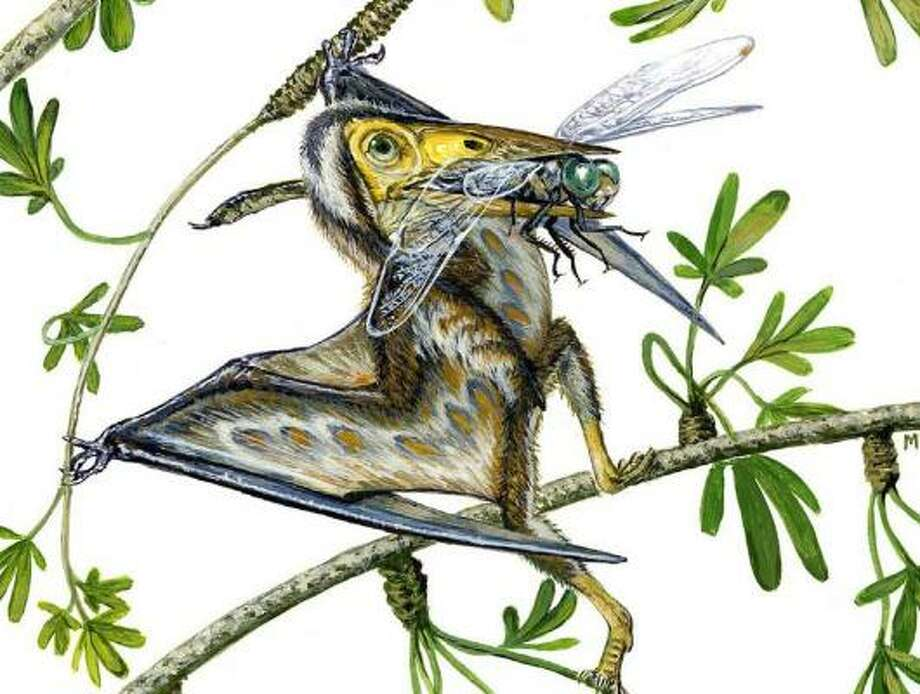 The fossil of a new species named Nemicolopterus crypticus was found in China. Photo: Michael Skrepnickaption, NATIONAL ACADEMY OF SCIENCES