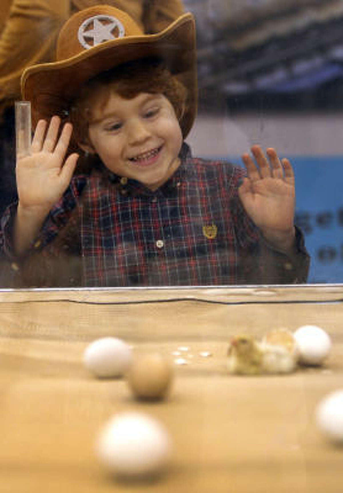 Jack Lopez, 3, League City, watches a newly hatched chick in the AGventure area of Reliant Center during Houston Livestock Show and Rodeo Monday, March 14, 2011, in Houston.