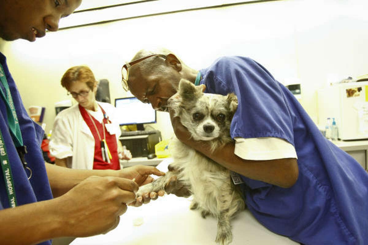 Duncan, a mix, gets examined by veterinary technicians Dempsey Jones, left, Toni Nichols and Melvin Davis.