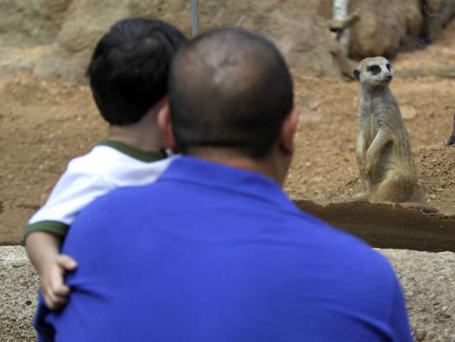 Visitors stop to watch the meerkats, on alert in their exhibit area Saturday at the Houston Zoo. The zoo will now offer free admission after 2 p.m. on the first Tuesday of each month. Photo: Karen Warren, Chronicle