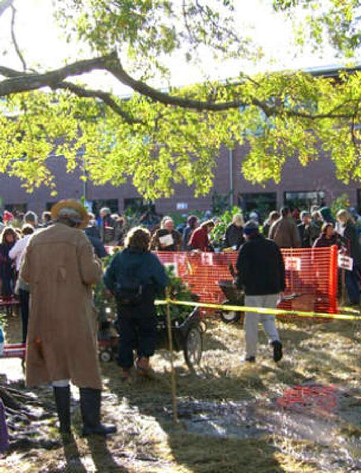 Knowing more about fruit trees will help you navigate the 9th annual Urban Harvest Fruit Tree Sale smoothly. The next sale will be Jan. 17 in the Rice University football stadium concourse. Photo: Urban Harvest