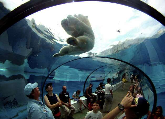 Detroit Zoo visitors watch a polar bear play with a frozen treat in the cool environment of the underwater Arctic Ring of Life exhibit in Royal Oak, Mich., on Wednesday July 20, 2011. Photo: AP Photo/Detroit Free Press,  Eric Seals