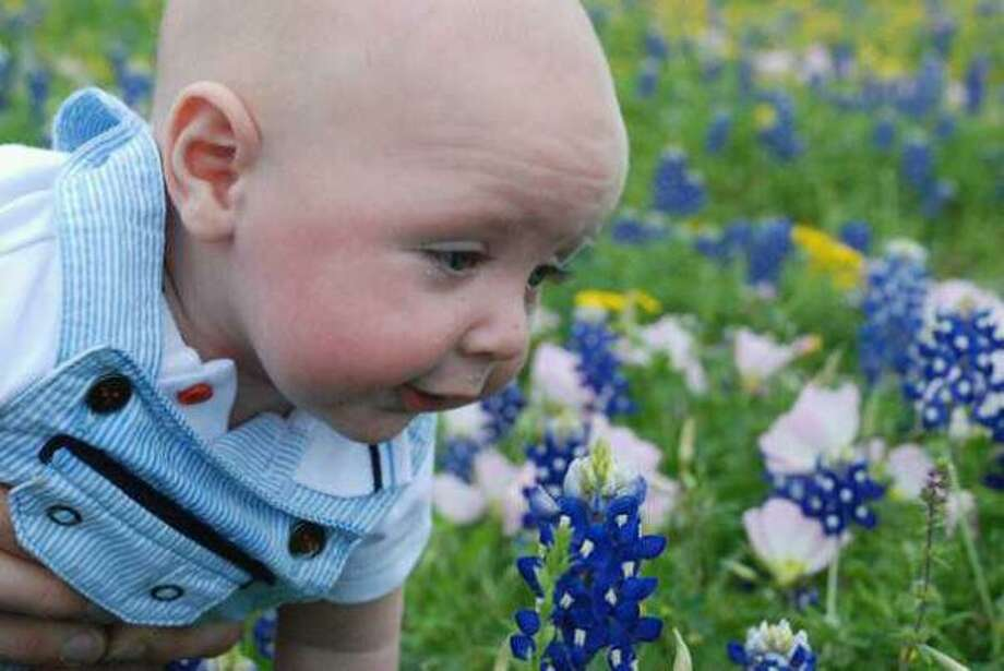 Bluebonnets