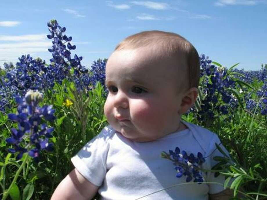 Texas's State FlowerParenting advice, blogs and forums at MomHouston.com. Photo: Xanderdas, Chron.commons