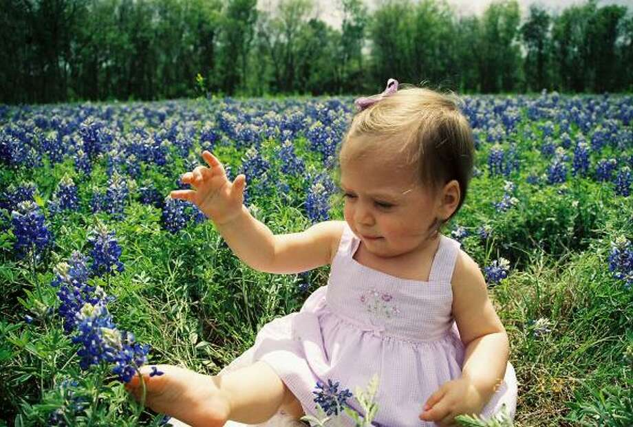 Baby BluebonnettParenting advice, blogs and forums at MomHouston.com. Photo: Lcfargo, Chron.commons