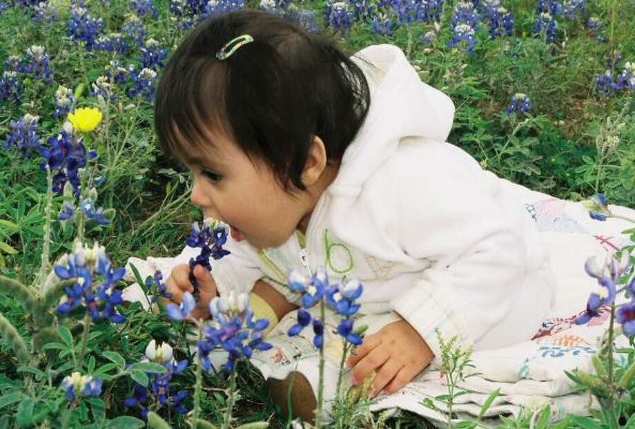 Lilli loves her bluebonnetsParenting advice, blogs and forums at MomHouston.com. Photo: TriceMc, Chron.commons
