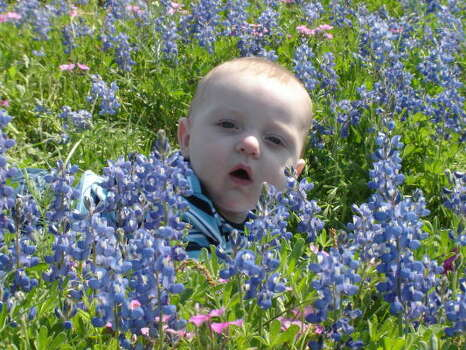 1st Bluebonnet photoParenting advice, blogs and forums at MomHouston.com. Photo: Jennlyons, Chron.commons