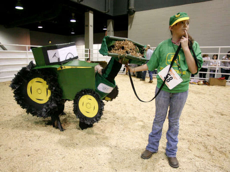 "Charli Villarreal, 12, of Hempstead, holds onto her llama ""Red River Swizzle"" who was dressed up like a John Deere Tractor, complete with the front end loader on its face, during  the Llama and Alpaca Costume and Halter show at the Reliant Arena Sales Pavillion, during the Houston Livestock Show and Rodeo, in 2011. Photo: Karen Warren, Chronicle"