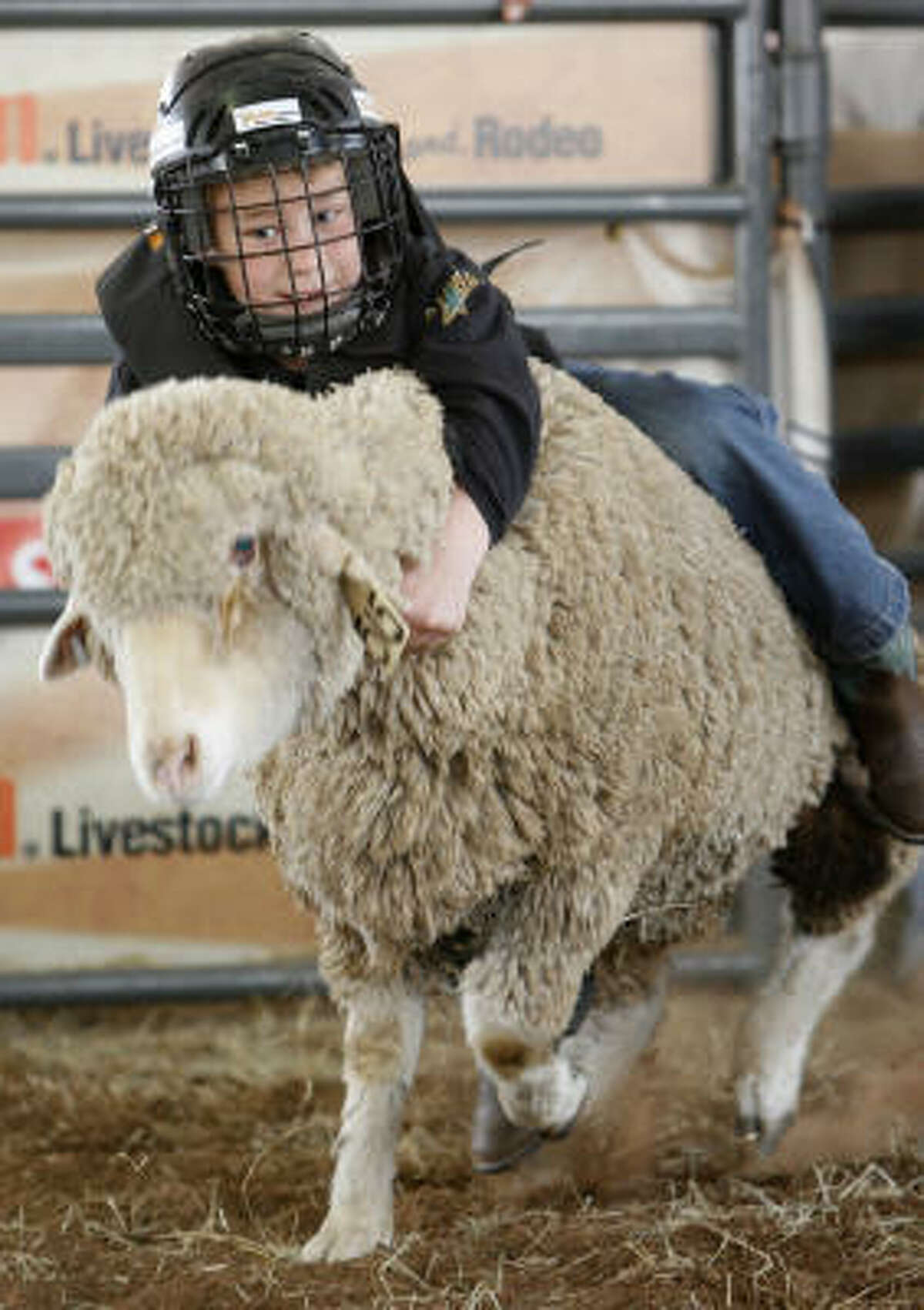 William Honeycutt, of Frisco, Texas, hangs onto his sheep during the Mutton Bustin' in Kids Country at the Houston Livestock Show and Rodeo.