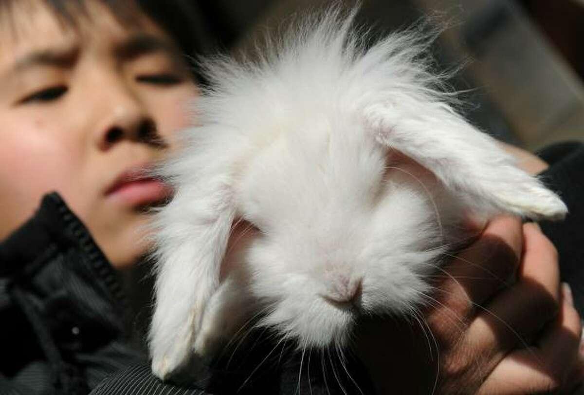 A rabbit in a pet shop in Beijing gets the spotlight.