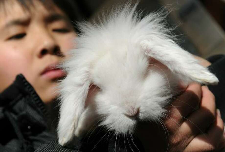 A rabbit in a pet shop in Beijing gets the spotlight. Photo: PETER PARKS, AFP/Getty Images