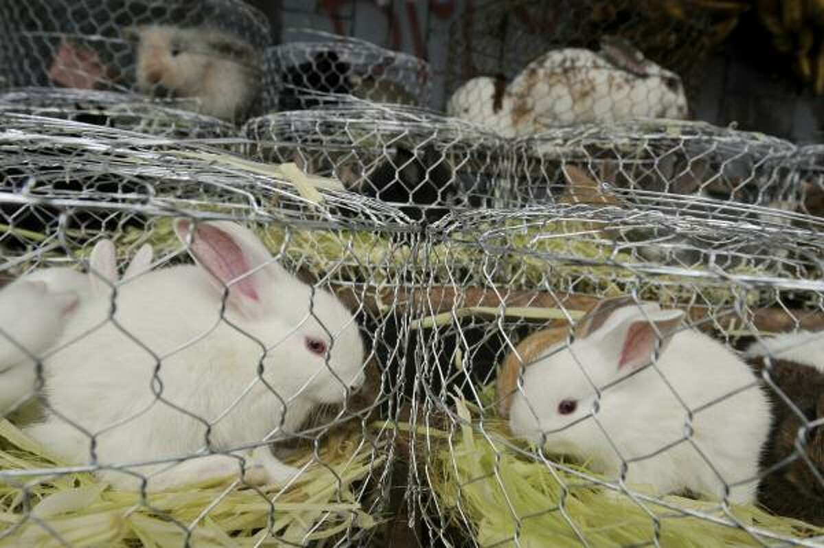 With just days to go before the Year of the Rabbit dawns, animal-welfare groups in Asia are warning of an inevitable outcome: abandoned and neglected bunnies.