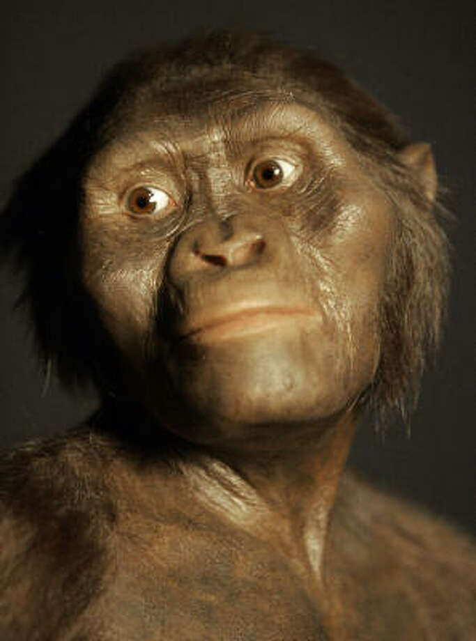 A three-dimensional model of the 3.2 million-year-old hominid known as Lucy is to be on display at the Houston Museum of Natural Science. The exhibition opens Aug. 31. Photo: PAT SULLIVAN, AP