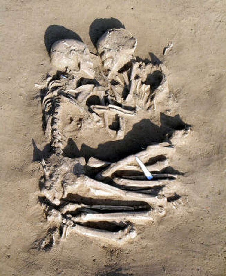 Archaeologists unearthed the skeletons dating to the late Neolithic period outside Mantua, 25 miles south of Verona. Photo: AP