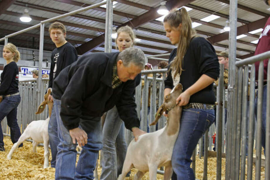 Fritz Stinken, judge from Snook, examines the goat owned by Callie Shugart, a Katy High School student in class one market goat judging at the L.D. Robinson Pavilion. Photo: Suzanne Rehak, For The Chronicle