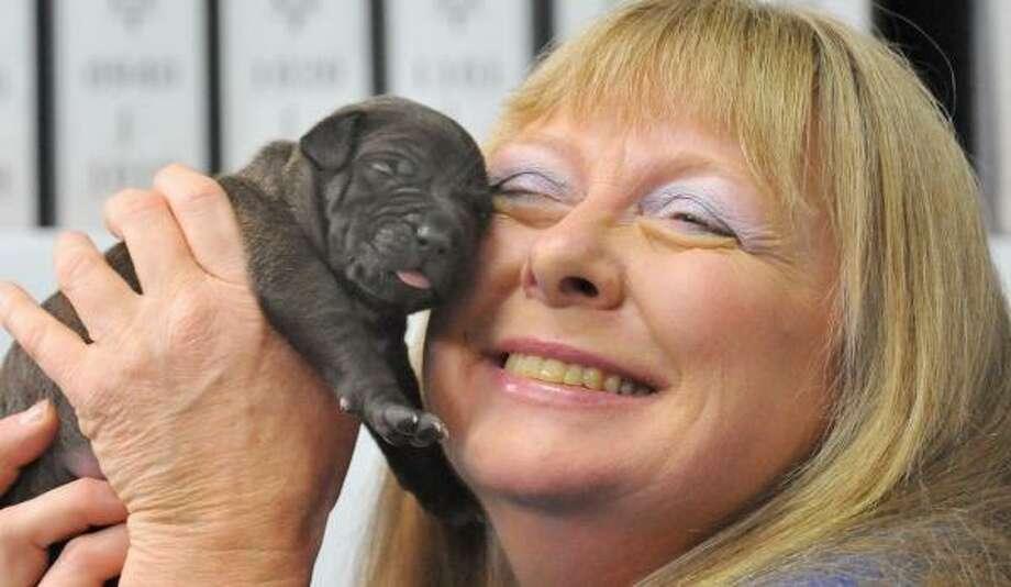 Bernann McKinney with one of her pit bull clones last week. Photo: KIM JAE-HWAN, AFP/GETTY IMAGES