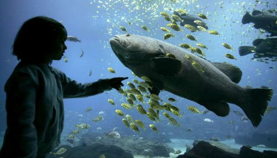 The Georgia Aquarium, open less than a year, is touted as the world's largest and most interactive aquarium. Photo: TAMI CHAPPELL, REUTERS
