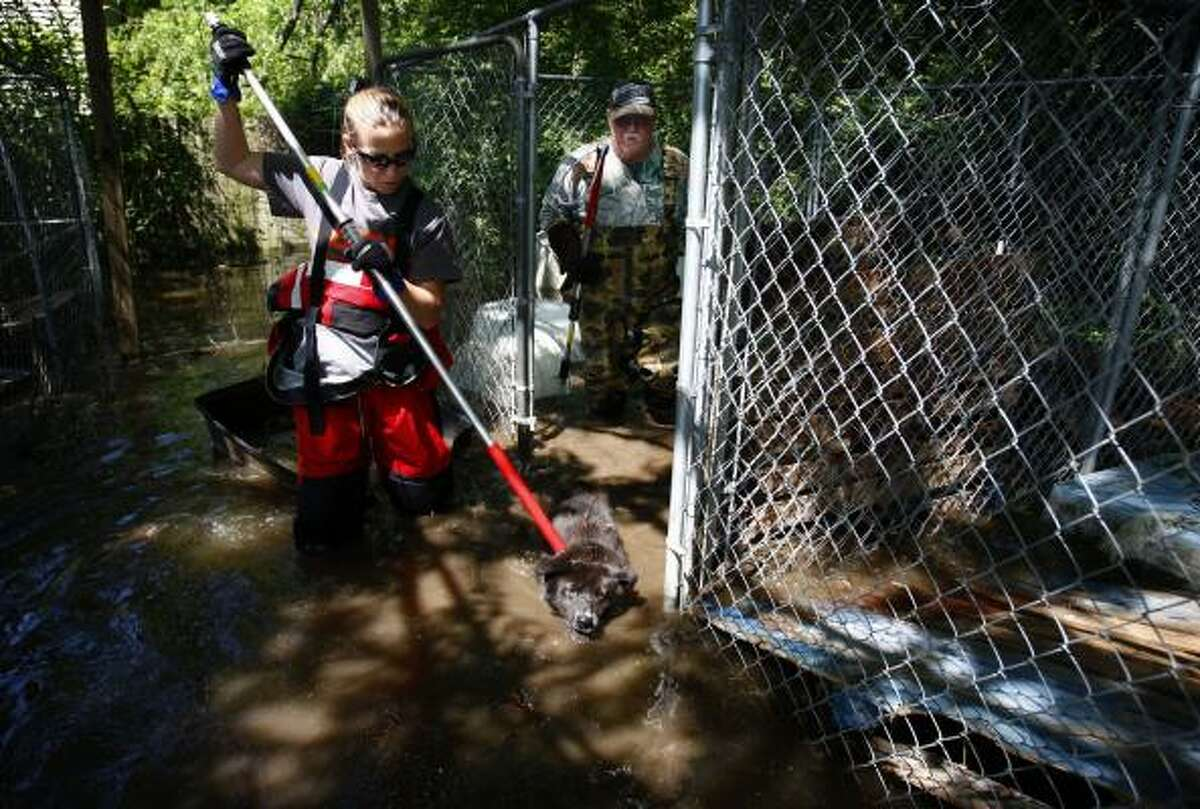 Bonnie Dean, left, with an animal rescue unit from the American Society for the Prevention of Cruelty to Animals, helps George Edwards rescue some of his dogs from rising water on Locke Road in Millington, Tenn.