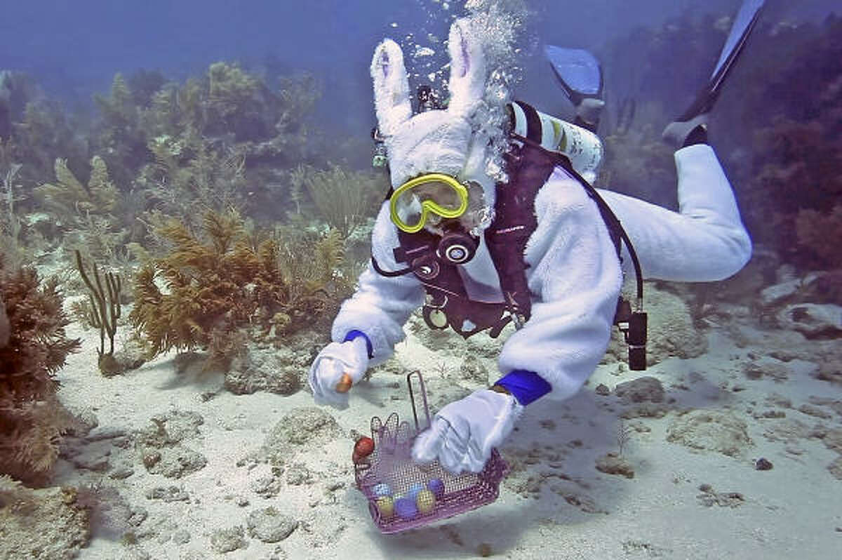 Here we see a rare underwater Easter bunny. Scuba divers beware.