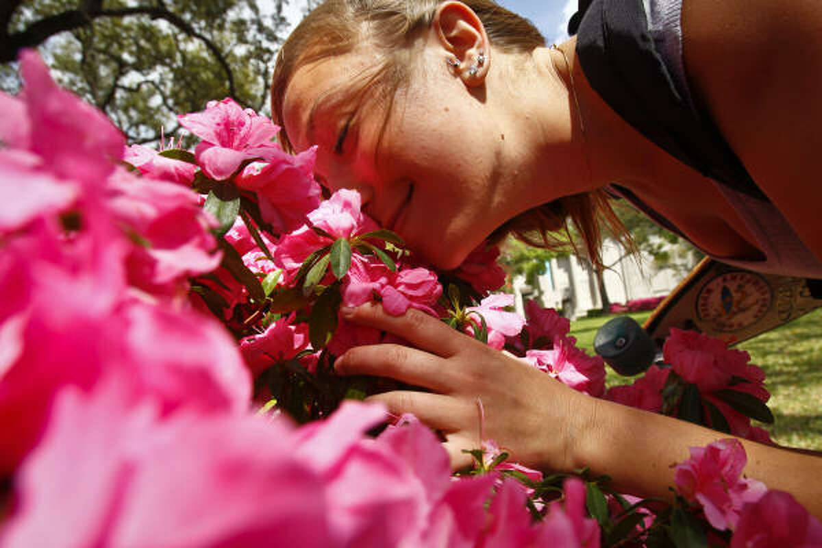 Halina Wojtkowski smells the blooming azaleas on the South Lawn of the Museum of Fine Arts Houston, between the MFAH and Mecom Fountain in Houston.