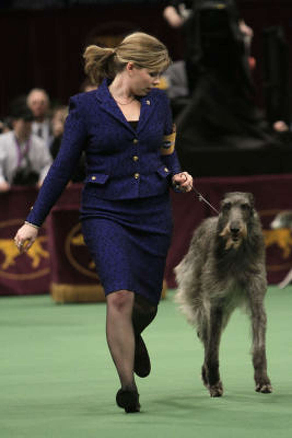 Scottish deerhound Foxcliffe Hickory Wind won Best of Show on Tuesday and the hound division earlier.