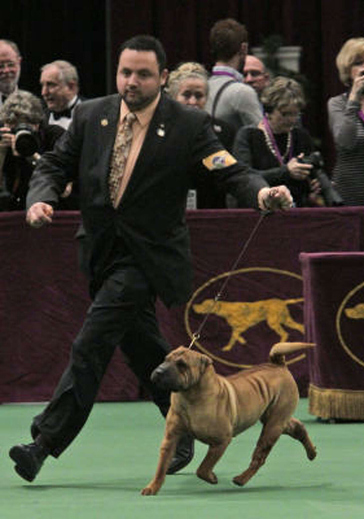 Jayne, a Chinese shar-pei, won in the non-sporting group.