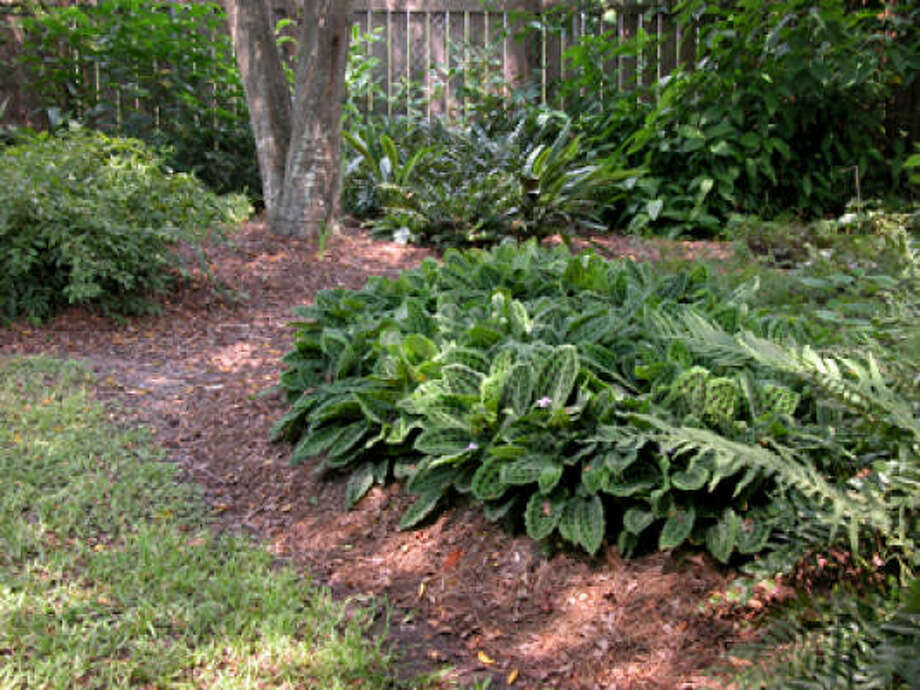 Landscaping Under A Shade Tree Houston Chronicle