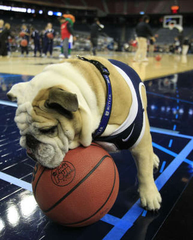 Butler mascot Blue II plays with a basketball courtside before Butler's practice. Photo: Brett Coomer, Houston Chronicle