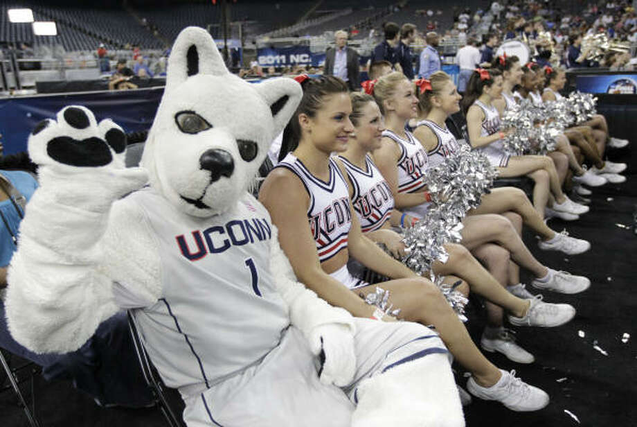 The UConn Husky sits in a row with the cheerleaders during the University of Connecticut open team practice Friday. Photo: Karen Warren, Houston Chronicle