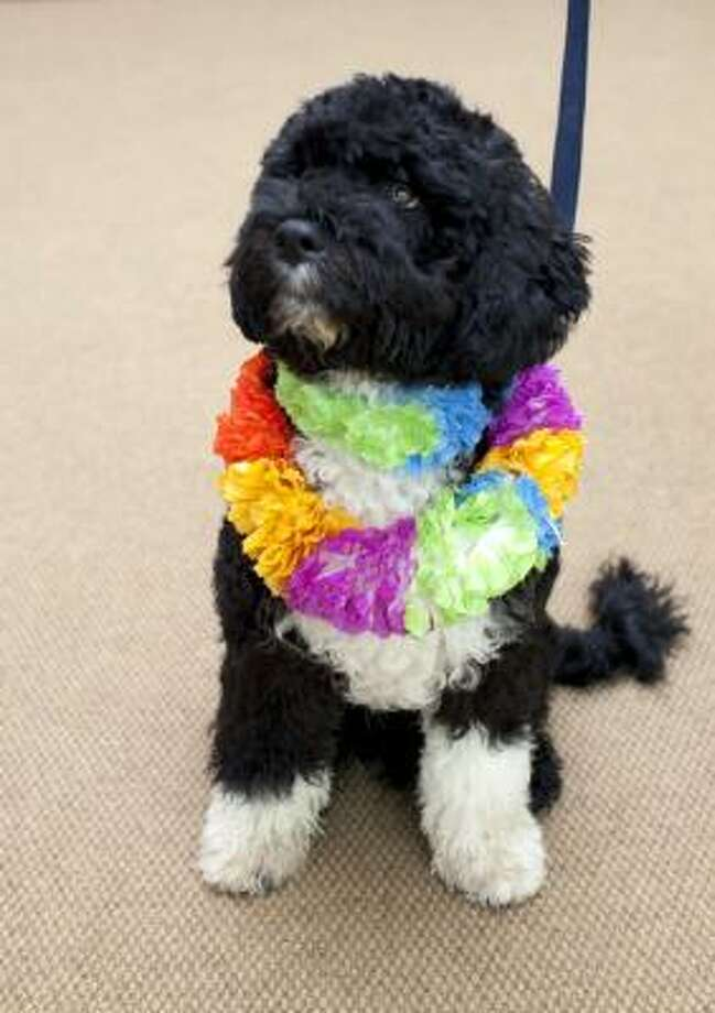 The six-month-old Portuguese water dog, reportedly named Bo, was given to Malia and Sasha Obama as a gift by Sen. Edward Kennedy. Photo: Washington Post