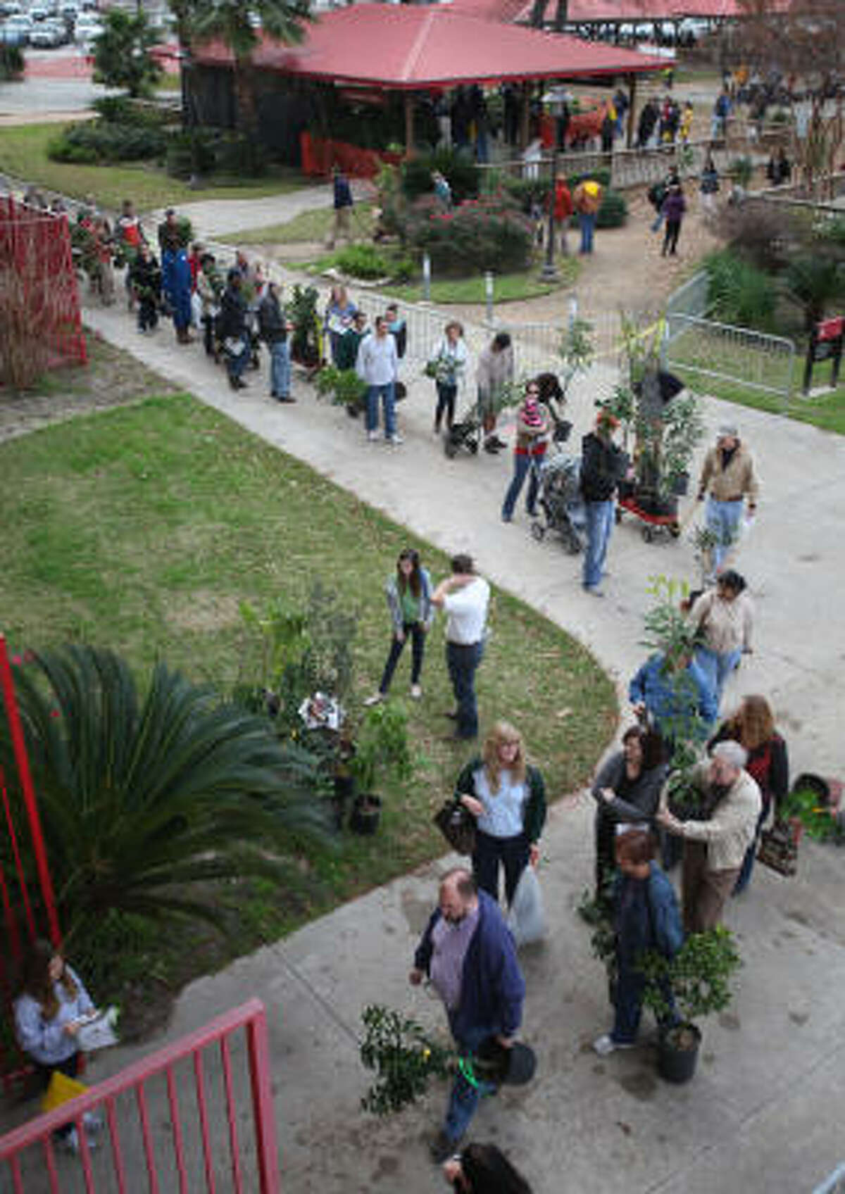 People interested in having their own fruit trees in their backyards show up to the Urban Harvest fruit sale despite cold at University of Houston Robertson Stadium.