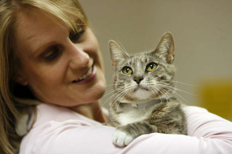 Houston SPCA's Heidi Brasher shows off Spivey, a one-year-old Gray Tabby. Photo: Kevin Fujii, Houston Chronicle