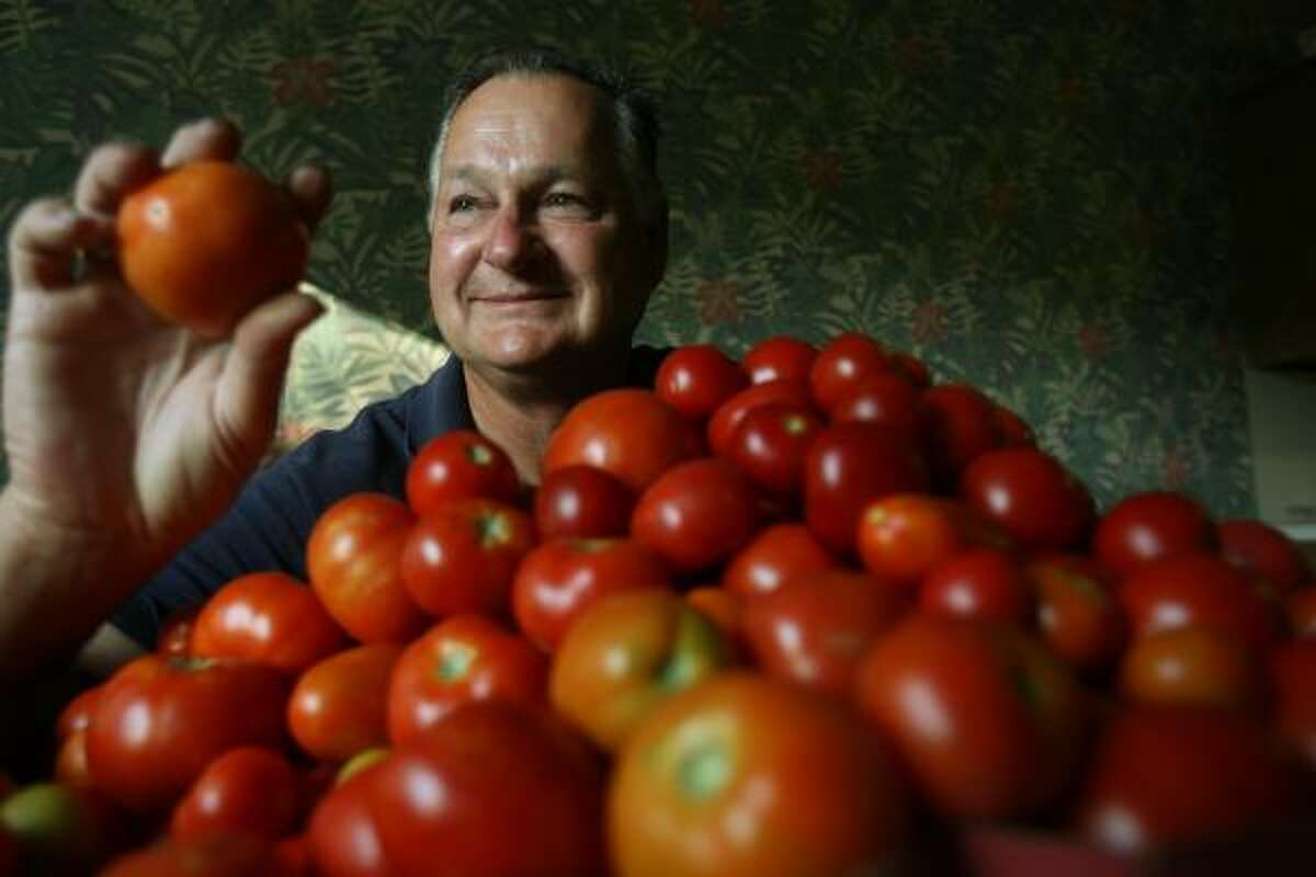 Douglas McLeod, Master Gardener, sits in front of approximately 300 homegrown tomatoes in his kitchen on June 10.