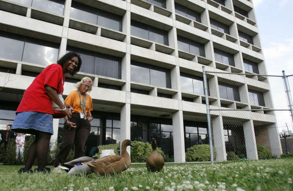 Annette Hill, left, and Judy Brady feed the ducks behind the center's Cullen Residence Hall. The complex between West Dallas and Allen Parkway near Shepherd is home to about 200 people with mental retardation.